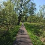 Bohlenweg Unterspreewald