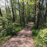 Radweg im Spreewald